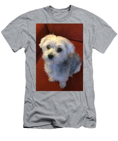 Yorkshire Terrier Men's T-Shirt (Athletic Fit)