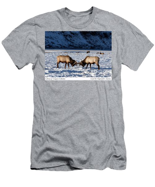 Young Bull Elk In Jackson  Hole In Wyoming Men's T-Shirt (Athletic Fit)