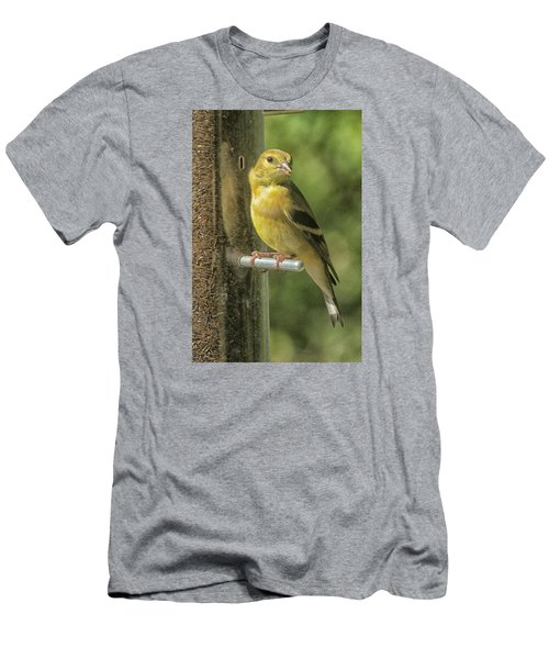 Young Goldfinch Men's T-Shirt (Slim Fit) by Constantine Gregory