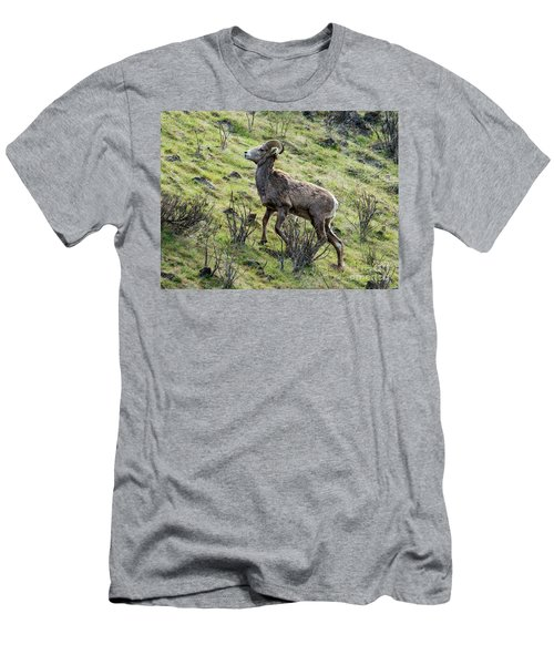 Men's T-Shirt (Slim Fit) featuring the photograph Young Ram Climbing by Mike Dawson