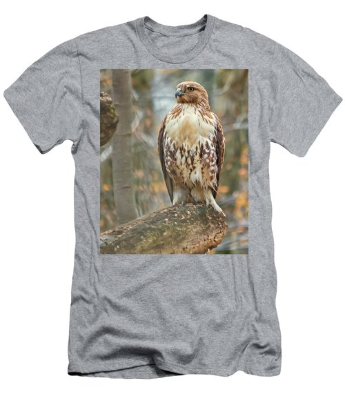 Young Red Tailed Hawk  Men's T-Shirt (Athletic Fit)