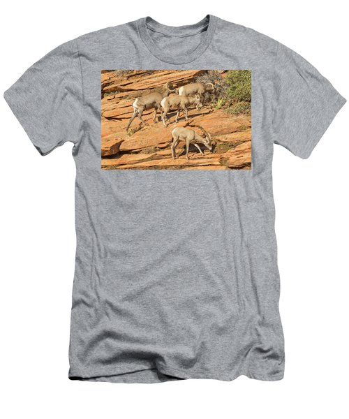 Zion Big Horn Sheep Men's T-Shirt (Slim Fit) by Peter J Sucy
