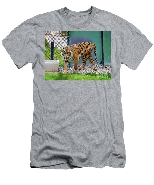 Men's T-Shirt (Athletic Fit) featuring the photograph Zoo Tiger Staring At Me by Merton Allen