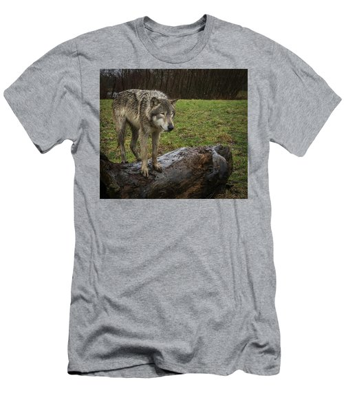 Hangin On The Log Men's T-Shirt (Athletic Fit)