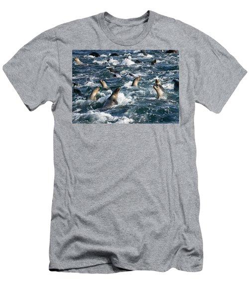 A Raft Of Sea Lions Men's T-Shirt (Athletic Fit)