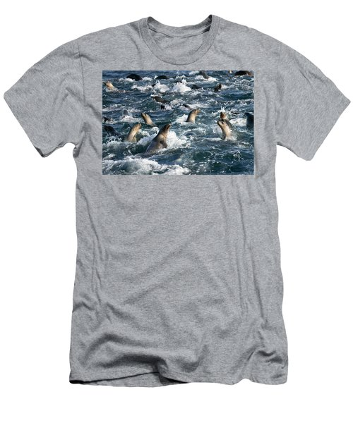 A Raft Of Sea Lions Men's T-Shirt (Athletic Fit)