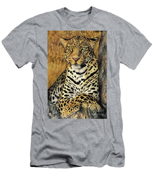 African Leopard Portrait Wildlife Rescue Men's T-Shirt (Athletic Fit)