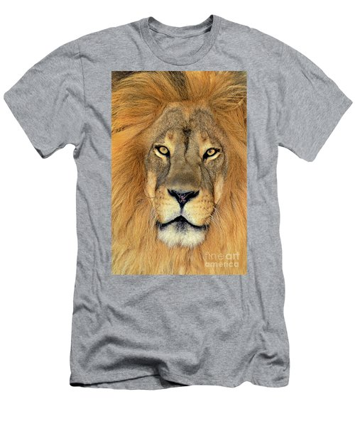 African Lion Portrait Wildlife Rescue Men's T-Shirt (Athletic Fit)