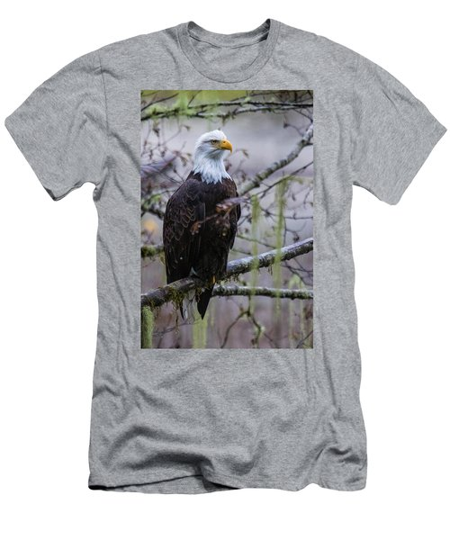 Bald Eagle In Rain Forest Men's T-Shirt (Athletic Fit)