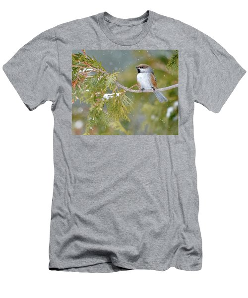 Boreal Chickadee In Winter Men's T-Shirt (Athletic Fit)