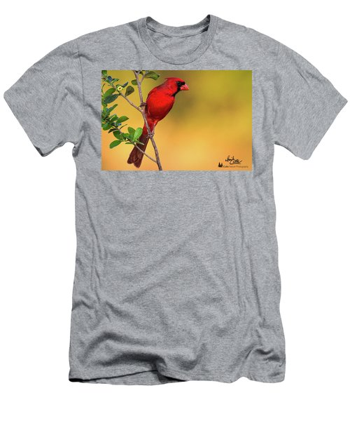 Bright Red Cardinal Men's T-Shirt (Athletic Fit)