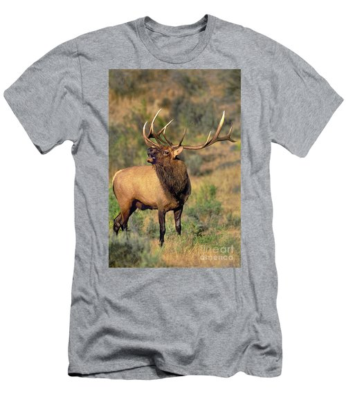 Bull Elk In Rut Bugling Yellowstone Wyoming Wildlife Men's T-Shirt (Athletic Fit)