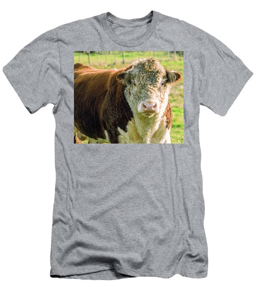 Bull In The Country Side Of Tasmania. Men's T-Shirt (Athletic Fit)