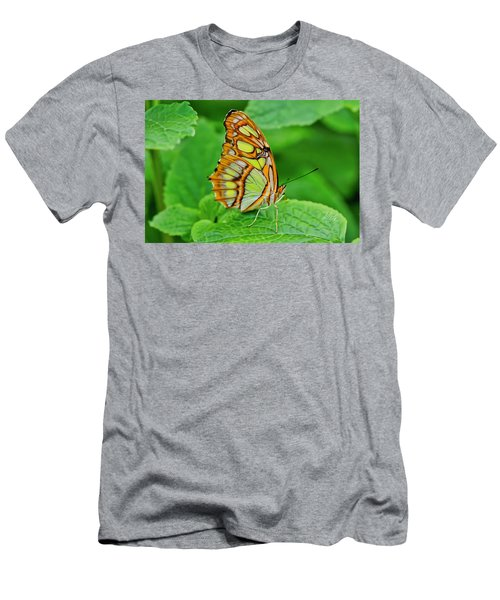 Butterfly Leaf Men's T-Shirt (Athletic Fit)