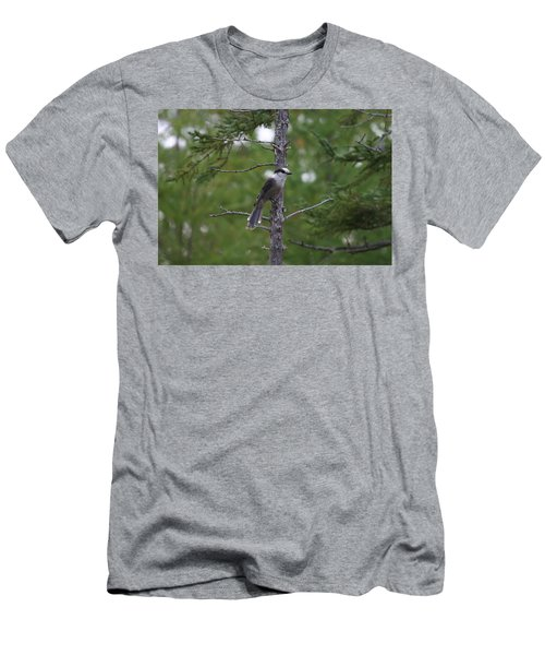Canada Jay 101305 Men's T-Shirt (Athletic Fit)