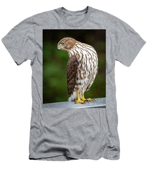 Cooper's Hawk Men's T-Shirt (Athletic Fit)