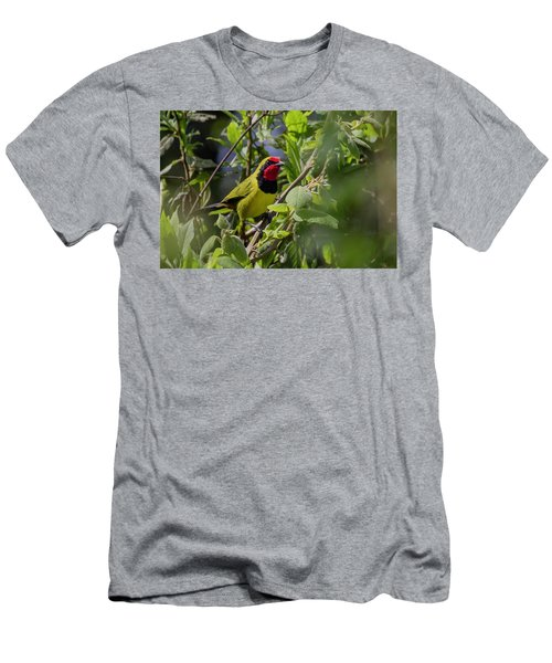Doherty's Bushshrike Men's T-Shirt (Athletic Fit)