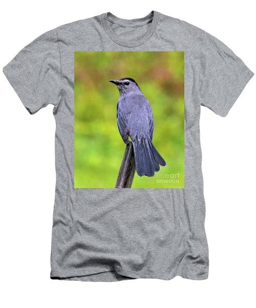 Grey Catbird Men's T-Shirt (Athletic Fit)