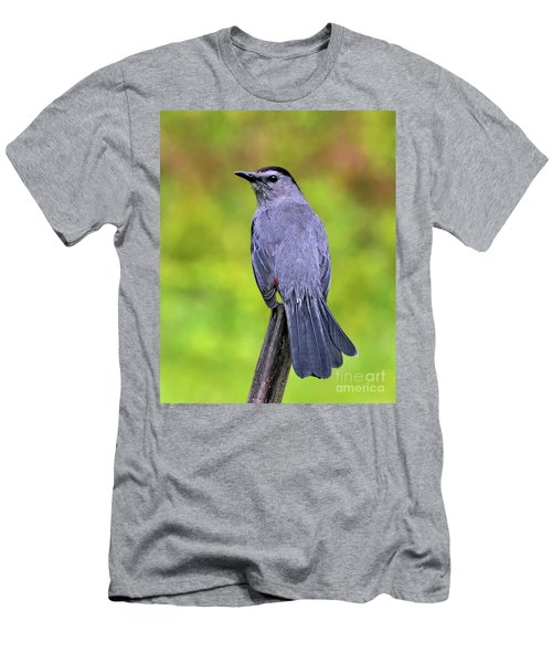 Grey Catbird Men's T-Shirt (Athletic Fit)