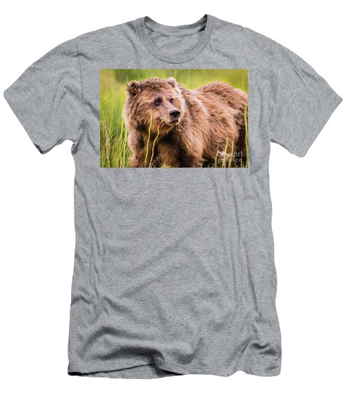 Grizzly In Lake Clark National Park, Alaska Men's T-Shirt (Athletic Fit)