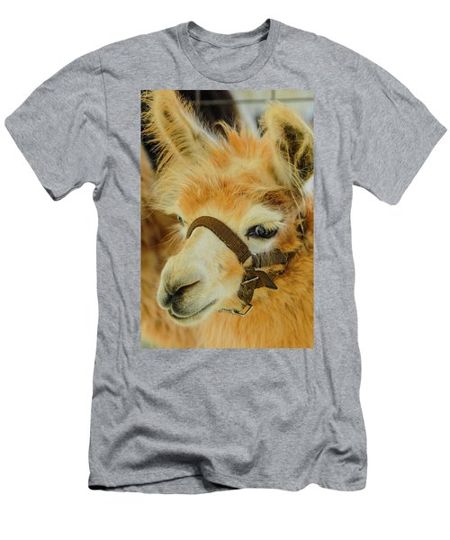 Happy Alpaca Men's T-Shirt (Athletic Fit)