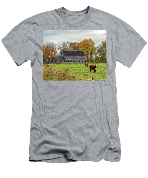 Herefords In Fall Men's T-Shirt (Athletic Fit)