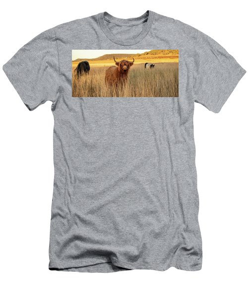 Highland Cows On The Farm Men's T-Shirt (Athletic Fit)