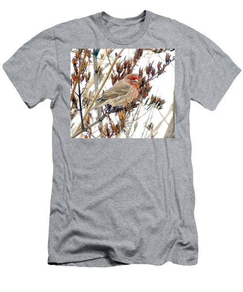House Finch In Winter Men's T-Shirt (Athletic Fit)