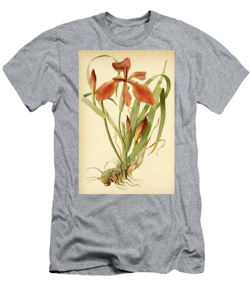 Iris Cuprea Copper Iris.  Men's T-Shirt (Athletic Fit)