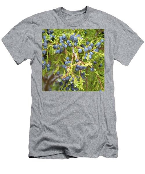 Juniper Berries Men's T-Shirt (Athletic Fit)