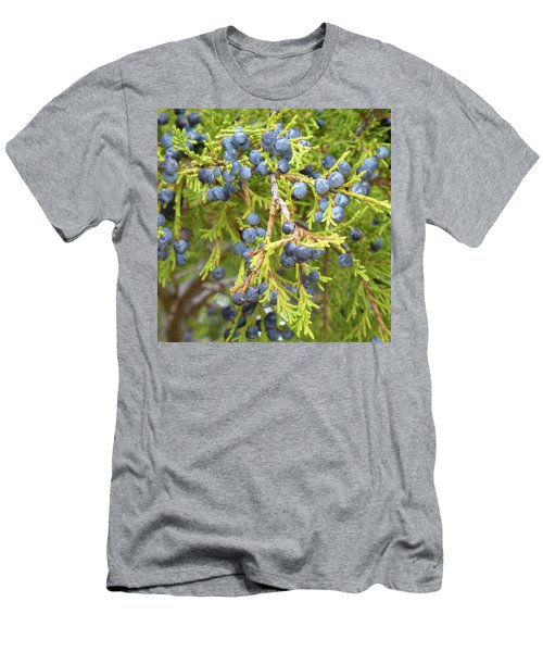 Juniper Berries Men's T-Shirt (Athletic Fit)