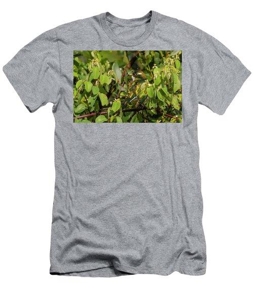 Klaas's Cuckoo Men's T-Shirt (Athletic Fit)