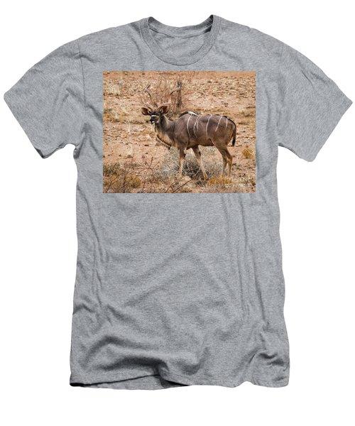 Kudu In The Kalahari Desert, Namibia Men's T-Shirt (Athletic Fit)