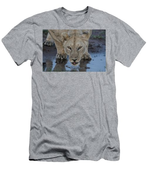 Lioness Drinking Men's T-Shirt (Athletic Fit)