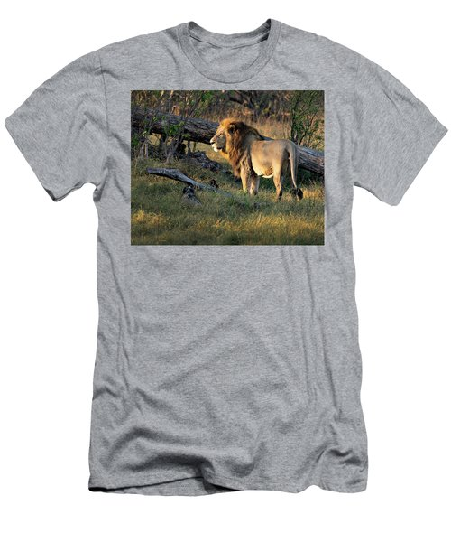 Male Lion In Botswana Men's T-Shirt (Athletic Fit)