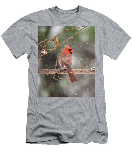 Male Red Cardinal Snowstorm Men's T-Shirt (Athletic Fit)