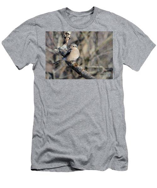 Northern Shrike Men's T-Shirt (Athletic Fit)