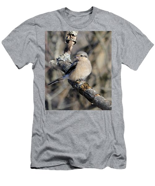 Northern Shrike Men's T-Shirt (Athletic Fit)