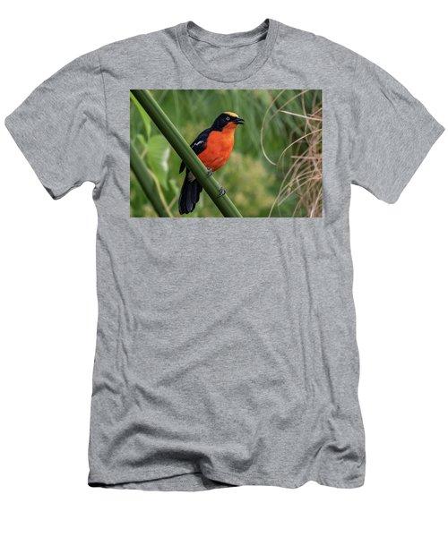 Papyrus Gonolek Men's T-Shirt (Athletic Fit)