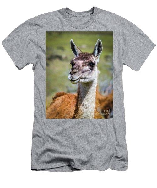 Portrait Of A Guanaco, Patagonia Men's T-Shirt (Athletic Fit)