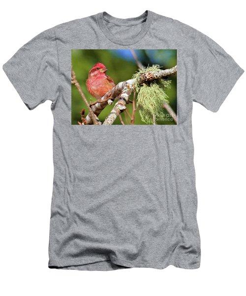 Purple Finch Men's T-Shirt (Athletic Fit)