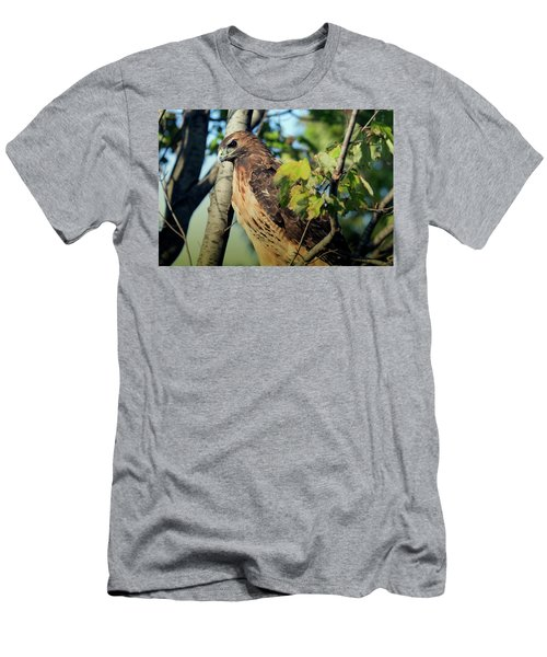 Red-tailed Hawk Looking Down From Tree Men's T-Shirt (Athletic Fit)