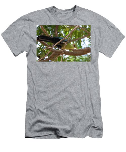 Schalow's Turaco Men's T-Shirt (Athletic Fit)