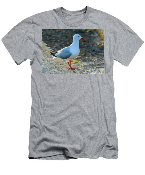 Seagull On The Breakwall Men's T-Shirt (Athletic Fit)