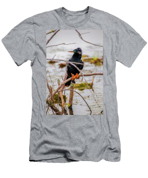 Stunning Anhinga Men's T-Shirt (Athletic Fit)