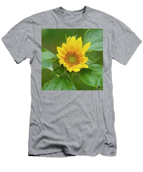 Sunflowers Helianthus 004 Men's T-Shirt (Athletic Fit)
