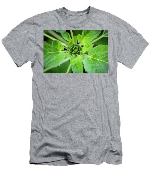 Sunflowers  Helianthus 021 Men's T-Shirt (Athletic Fit)