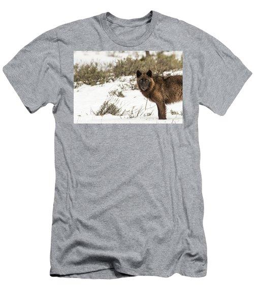 W12 Men's T-Shirt (Athletic Fit)