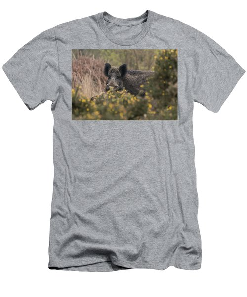 Wild Boar Sow Men's T-Shirt (Athletic Fit)