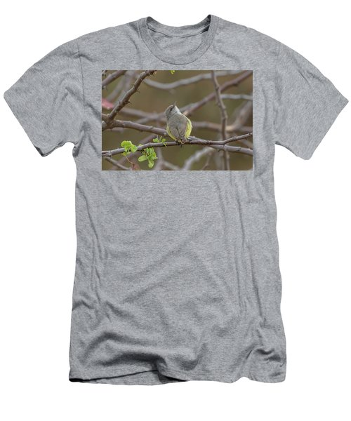Yellow-bellied Eremomela Men's T-Shirt (Athletic Fit)